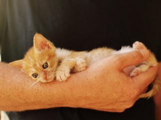 Men is holding little red kitten