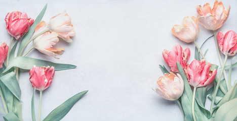 Pastel color tulips bunch for springtime holidays , greeting card mock up, spring nature background