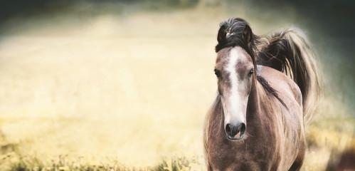 Brown koń z białym lampasem na twarzy przy tłem, sztandarem lub szablonem natury ,.