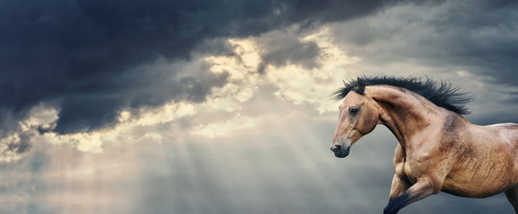 Bay Horse running at beautiful dark storm cloudy sky with rays of the sun breaking through the clouds and rain, banner or template