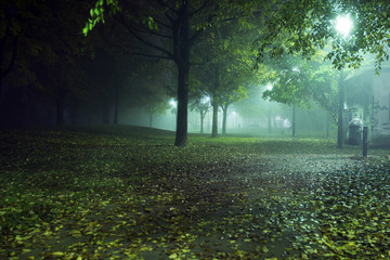 Autumn trees wrapped in fog by night in the park