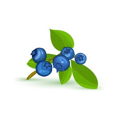 Blueberry branch and green leaves. Vector card illustration. Blue bilberry fresh and juicy for design of food packaging juice breakfast cosmetics tea detox diet.