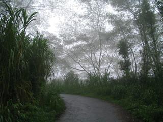 Naturaleza con niebla en Bali, Indonesia