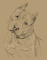 Monochrome American Staffordshire Terrier vector hand drawing portrait