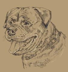 Monochrome rottweiler vector hand drawing portrait