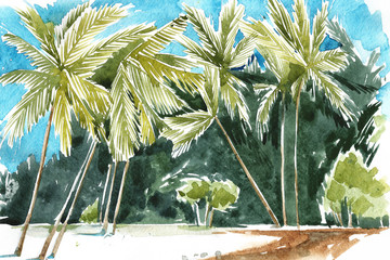 Hand drawn watercolor illustration of palm trees. Coastline of Palm Beach.