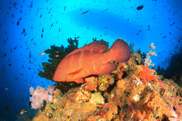 Scuba diving boat moored over coral reef with fish