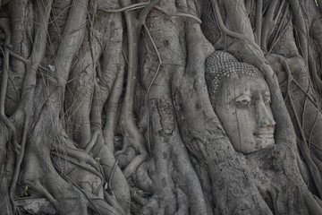 Buddha head overgrown by fig tree in Wat Mahathat that located in Ayutthaya historical park, the famous ancient temple in Thailand