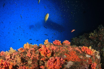 Coral reef underwater with fish. Scuba diving boat overhead