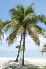 Nassau City Beach Palms