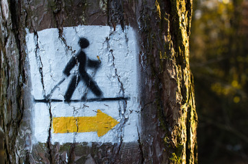 Nordic walking track sign painted on the tree in the forest Wall mural