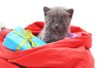 Kitten in a Christmas bag with gifts.