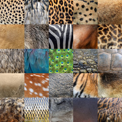 Collection of many real wild animals skin