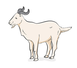 Domestic Goat Vector Illustration