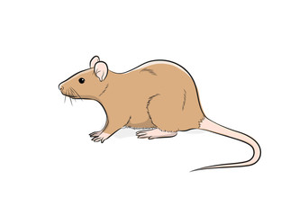 Domestic Cute Mouse Vector Illustration