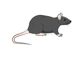 Wild Brown Rat Vector Illustration