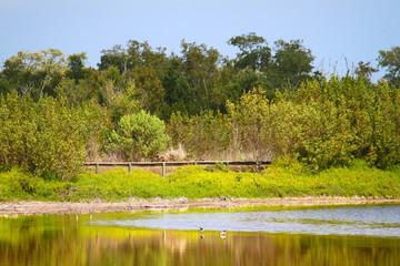 Wall Mural - Everglades National Park Nature Boardwalk