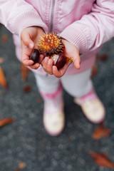 Girl holding conker in hands