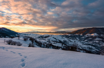 snowy slopes in mountains at sunrise. beautiful landscape in Carpathian mountains