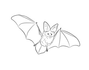 Flying Bat Sketching Vector