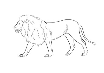 Lion Drawing Vector Illustration