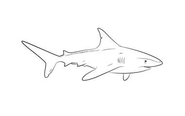 Wild Shark Drawing Vector Illustration