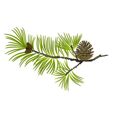 Pine tree Branch and pine cone on a white background vector illustration editable hand draw