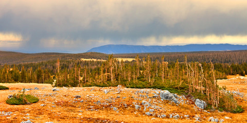 Wall Mural - Wyoming National Forest Rain Clouds