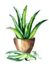 Aloe plant. Watercolor hand drawn illustration