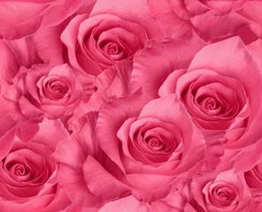 seamless pattern pink rose