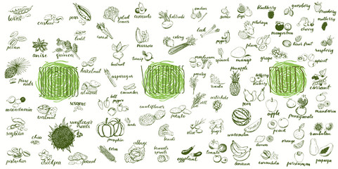 Fruits, vegetables and superfoods collection. Hand drawn set of healthy and organic food. Multiset of vegetable and fruits sketches for menu design.