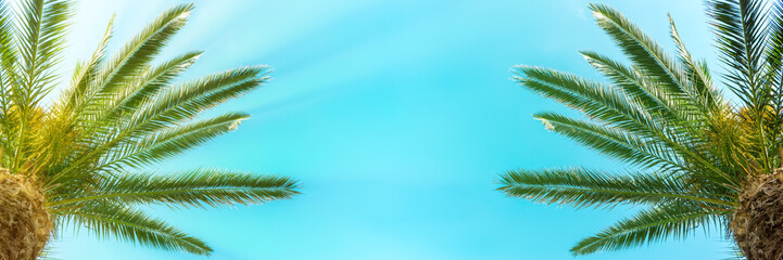 Palm trees on the blue sky background. Panoramic view.