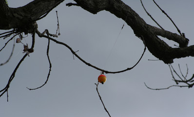 Tangled fishing line with a red and white bobber caught in a tree limb