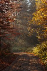 nature autumn sunshine leaves yellow