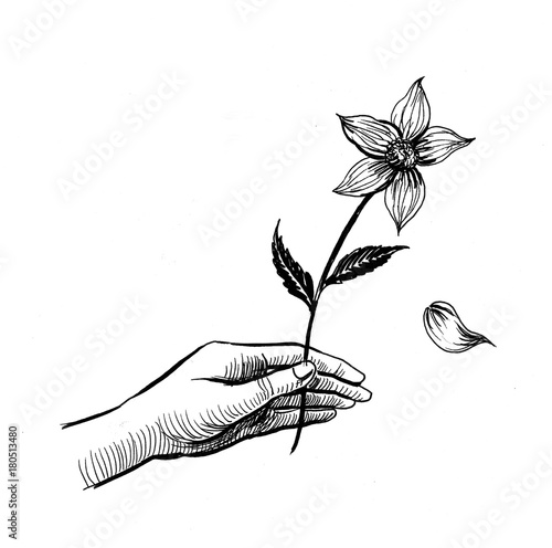 Ink Drawing Of A Hand Holding A Flower Stock Photo And Royalty Free