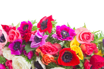 Fresh blooming anemones and roses flowers border isolated over white background