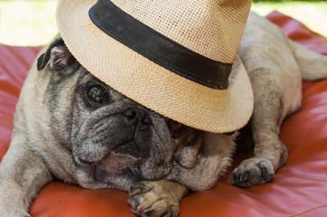 cachorro raça pug com chapéu de palha