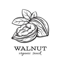 hand drawn walnut