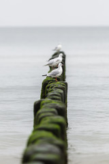 seagulls sitting on stakes at the seashore