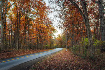 Country road in a forest of orange autumn foliage