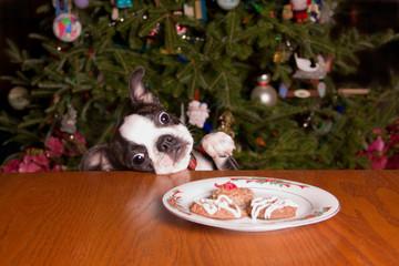 Poopsie Christmas Reaching for Cookies
