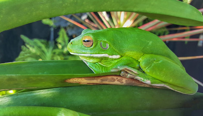 green frog camouflaged