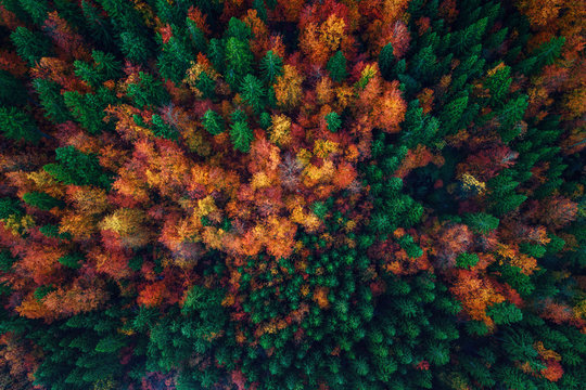 Aerial view over autumn forest landscape