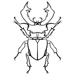 Beetle deer. Horned Beetle. Big Insect Line art
