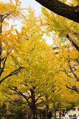 Yokoamicho Park in autumun / Yokoamicho Park is a Tokyo metropolitan park in Yokoami, Sumida-ku, Tokyo Japn.