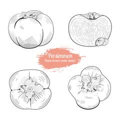 Persimmon hand drawn vector sketch set. Food illustration