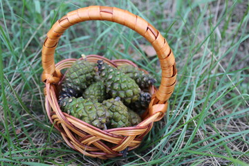 A large basket full of pine cones.