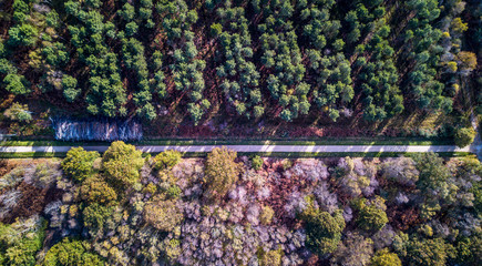 Drone view close-up of a forest with colorful trees and a walking path crossing the wood