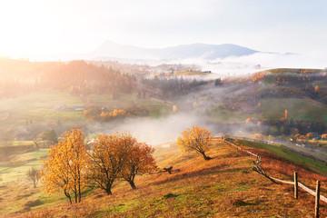 Majestic landscape with autumn trees in misty forest. Carpathian, Ukraine, Europe. Beauty world