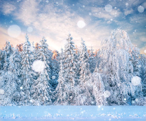 Mysterious winter landscape majestic mountains in winter. Magical winter snow covered tree. Photo greeting card. Bokeh light effect, soft filter.